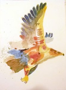 Colorful Hawk