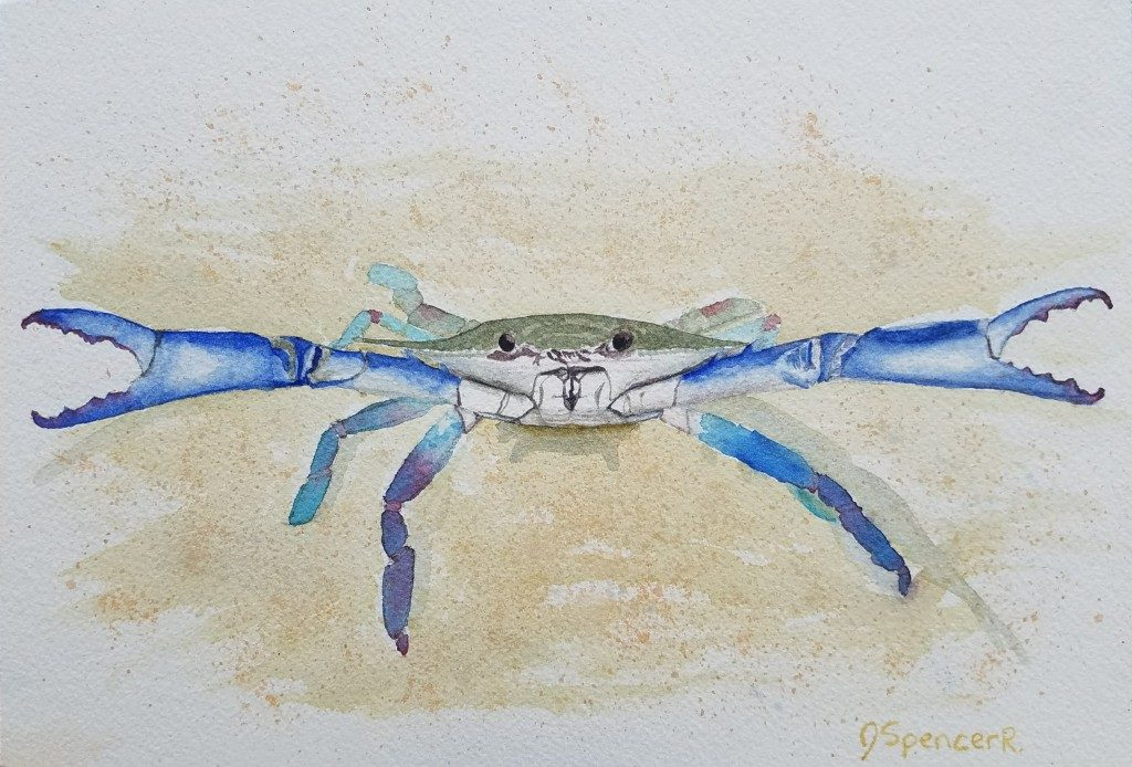 Feisty Blue Crab