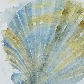 Chesapecten Blue Earth